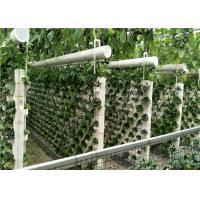 Quality 3 - 5m Gutter Height Plastic Panels Greenhouse Electric / Manual Rolling Up Vent Design for sale