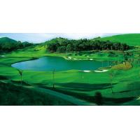 Buy cheap Golf course from wholesalers