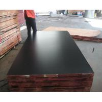 Quality 1220*2440, 1250*2500mm, 1500*3000mm MARINE PLYWOOD & high quality waterproof film faced plywood for sale