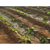 Buy Agriculture Drip Irrigation System Drip Tape ISO9001 factory at wholesale prices
