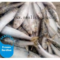 China New stock bqf frozen fish sardine whole round with competitive price on sale