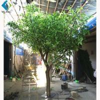 Wood Trunk Decorative Ficus Tree , 2.5m Height Artificial Outdoor Trees for sale