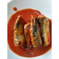 China Best sardines in tomato sauce 50X155g on sale