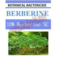 Quality 10% Berberine SC, biopesticide, organic bactericide, botanic, natural for sale