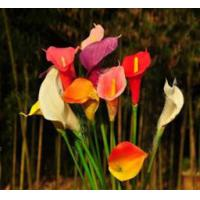 China artificial flowers PU calla lily on sale