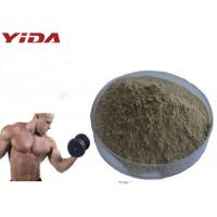 Quality Natural Oyster Extract Sex Steroid Hormones Raw Powder Pharmaceutical / Food Grade for sale
