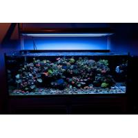 Pin Thumbs Reef Aquarium Led Lighting Reef Aquarium Led Lighting on ...