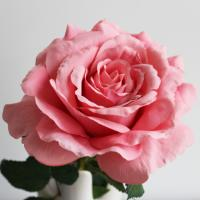 Quality Customized Size Artificial Flower Stems For Rose Flower OEM / ODM Accepted for sale