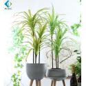 Dracaena Cinnabari Artificial Potted Plants , Green Dragon Tree Bonsai for sale