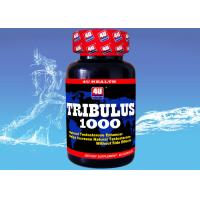 Quality Tribulus 1000 --- Tribulus Terrestris Capsule for Natural Testosterone , Sports Nutrition Supplements for Bodybuilding for sale