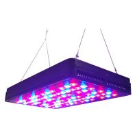 Quality Cidly 5W led grow lights hydroponics red blue LEDs contorl separately for sale