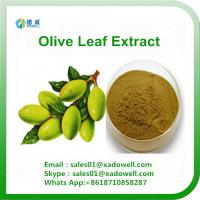 High Quality Plant Extract Olive Leaf Extract