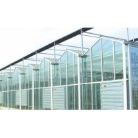 Quality Agricultural Intelligent Glass Multi Span Greenhouse Galvanized Steel Structure for sale
