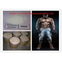 315-37-7 Pharmaceutical Testosterone Anabolic Steroid , Legal Testosterone Enanthate Powder