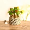 Mini Succulent Artificial Potted Plants Strange Shape Green Platsic Material for sale