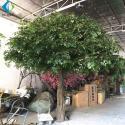 Fiberglass Trunk Artificial Ficus Tree For Hotel Exhibition Hall Ornament for sale