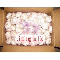 Quality Chinese Garlic for sale