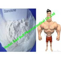Buy cheap Stanozolol Winstrol Bulking Cycle Steroids , GMP white crystalline powder product