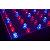 China 5050SMD Led Growing Lights 182leds Red / Blue High Efficiency on sale