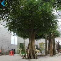 Umbrella Shape Faux Ficus Tree For Indoor Decoration 5-10 Years Life Time for sale