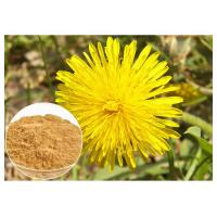 Quality Dandelion Root Plant Extract Powder Flavones Improving Immunity For Dietary Supplement for sale