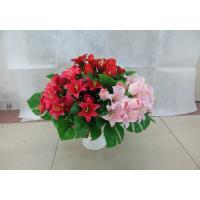 Quality PE / PP Material Artificial Orchid Stems , Faked / Faux Orchid Stems For Home for sale