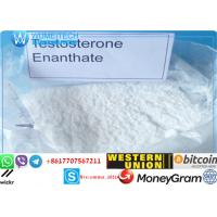 Steroids Testosterone Enanthate Good Quality Raw Steroid Hormone Powder  for Long-Term Cooperation