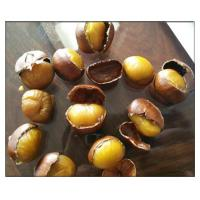 Fresh Chestnuts,Fried chestnuts, Organic Raw Fresh Chestnut
