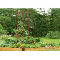 Quality Metal Garden Tomato Plant Stakes  Pack size  L73 Pack size  h 36 Tall or Towering, You Need Our Ladder Trellis for sale