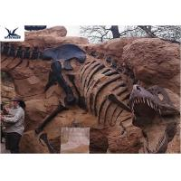 Quality Handmade Museum Dinosaur Skeleton Replica For Outdoor Decoration Warranty 1 Year for sale