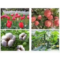 Quality Environmentally Safe Pesticides Carboxin Chemical Fertilizers In Agriculture for sale