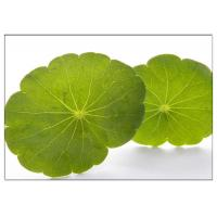 Quality Skin Scars Anti-aging Gotu Kola Leaf, Centella Asiatica Extract for Cosmetic industry for sale