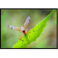 Quality 52918-63-5 Systemic Pesticides For Mosquito Control 2.5% Deltamethrin WP for sale
