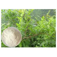Quality Dihydromyricetin ease alcohol syptoms Ampelopsis grossedentata Extract powder for sale