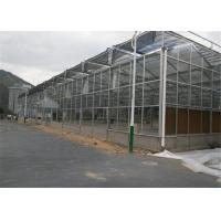 Quality Venlo Type Toughened Glass Greenhouse Hot Galvanized Steel Skeleton Material for sale