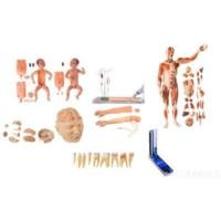 Buy cheap Equipments For Medical Education Application from wholesalers