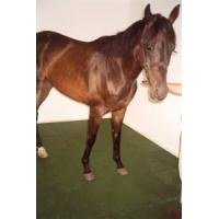 Quality not breed microbes rubber tiles for horse stall for sale