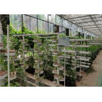 Quality Glass Cover Hydroponic Greenhouse Simple Structure With Large Inner Room for sale