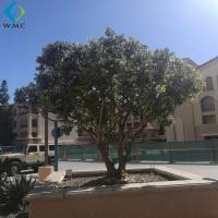 Green Plastic Olive Tree Large Size For Garden Customized Design for sale