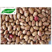 China Light speckled kidney bean America type on sale