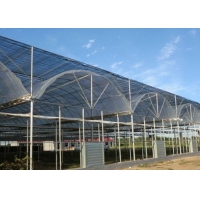 Quality Thermal Insulation Single Span Tunnel Plastic Film Greenhouse for sale