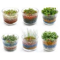 Buy cheap Free shipping negative ion generation three plant,office plants green gift,DIY potted plant product