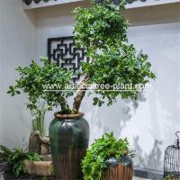 Green Money Plant Artificial Fortune Tree Water Jar Home Decoration ISO for sale