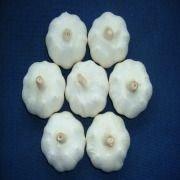 Jinxiang Pure Normal Garlic(2010)