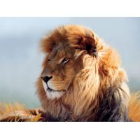 Buy cheap Strong Lion Plastic 3D Print Service Animal Designs 420mm × 594mm from wholesalers