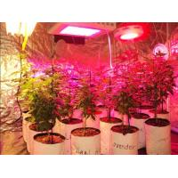 Quality DC12V IP68 full spectrum 4ft hydroponic greenhouse LED grow light 15/30/45/60W for sale