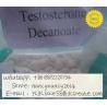 Raw Steroid Powder Testosterone Decanoate