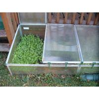 Quality Garden flower greenhouse for your garden yard, innovative products for sale