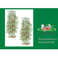 Quality Heavy Duty Metal Tomato Cages for sale