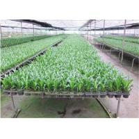 Buy cheap Seedbed System Greenhouse Rolling Benches For Multi Span Agricultural Greenhouse from wholesalers